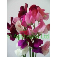 Grandiflora Mixes